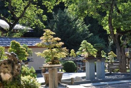 Bonsaimuseum – Urlaub im Appartement – Seevilla Cattina am Millstätter Se